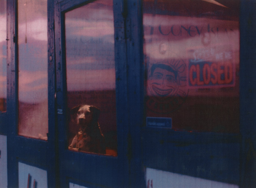 my award-winning photograph of a dalmation looking out a shop window at Coney Island, NY, 1991
